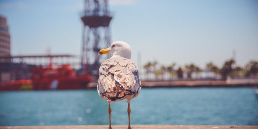 sea gull2