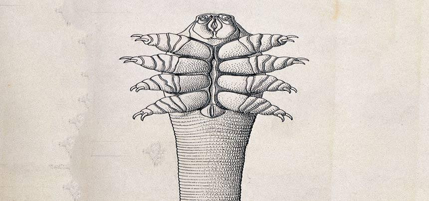 The eyelash mite
