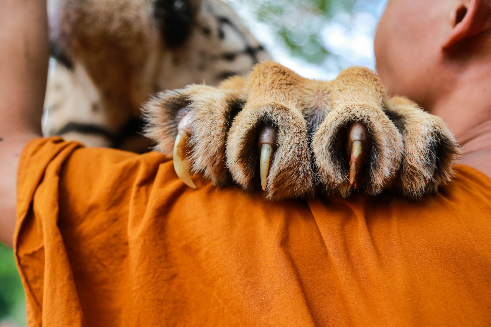 claws2