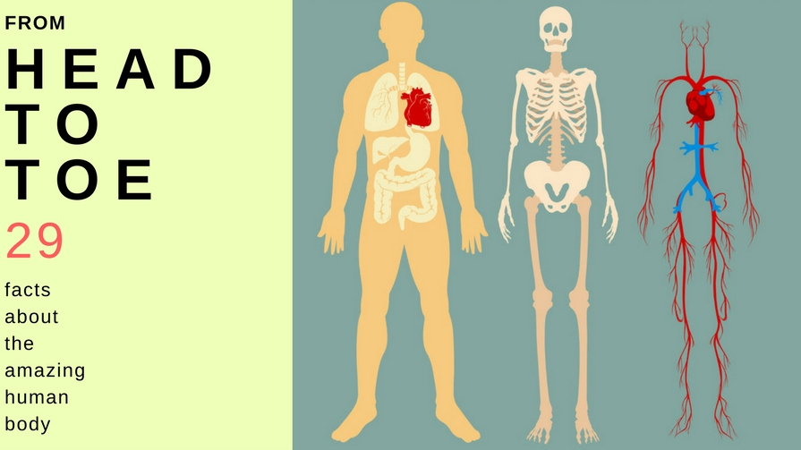 Amazing Facts About Human Heart Amazing Facts About Human Heart new pics