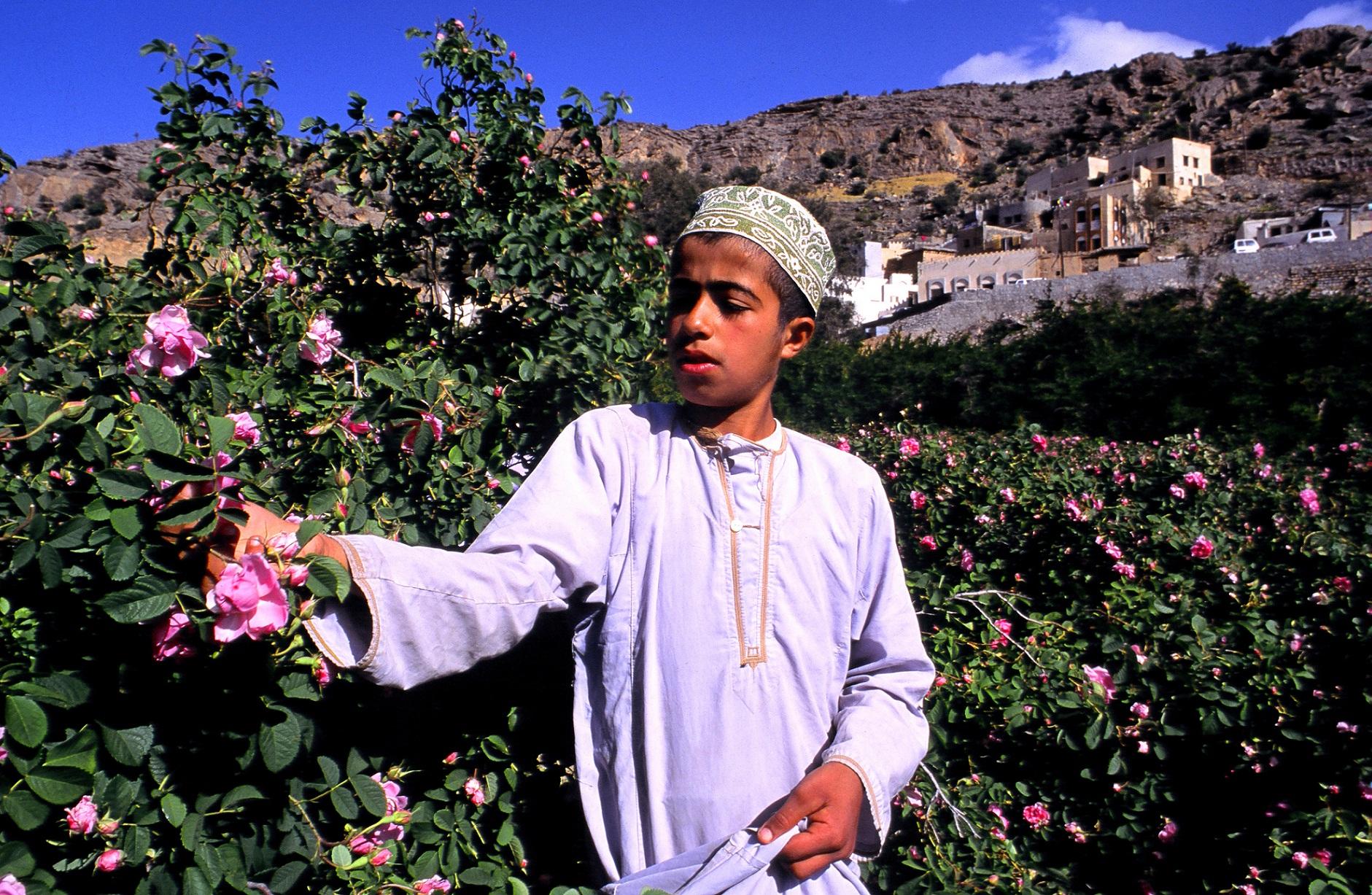 Rose-picker-Jabal-Akhdar-Oman