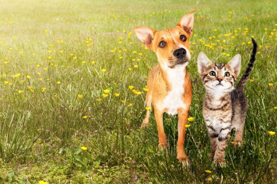new_study_reveals_whose_smarter_between_dogs_and_cats