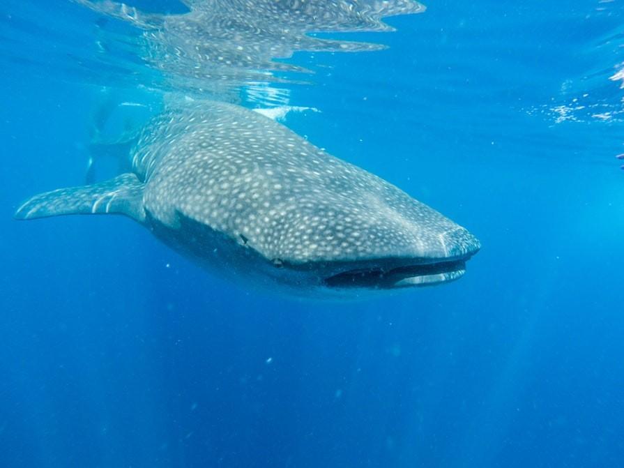 whale_Pete_Johnson_Pexels
