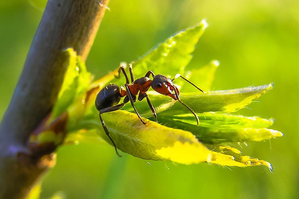 ant-farmer