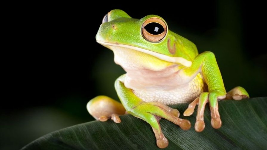 Frogs-affected-by-lighting