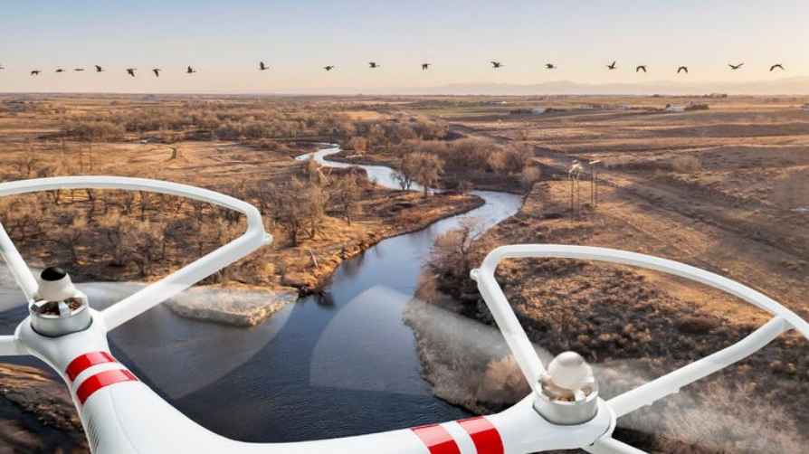 drone-for-wildlife-census