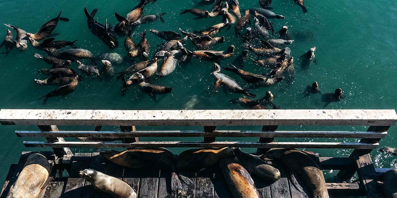 Santa-Cruz-Wharf-California