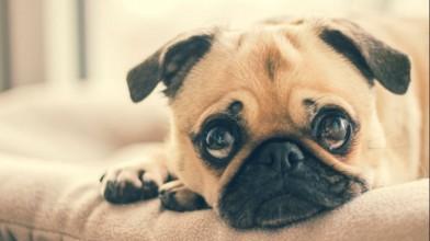 strange-pet-laws-across-the-world