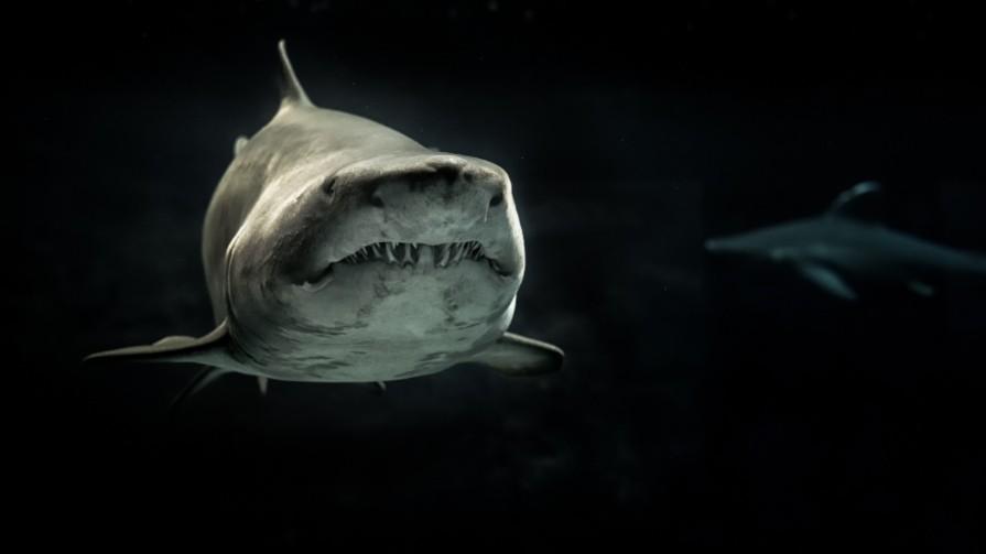 staving_off_shark_attacks_Pexels_George_Desipris