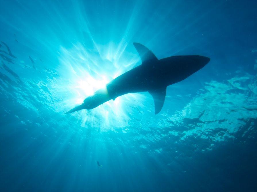 Ways_To_Avoid_Shark_Attacks