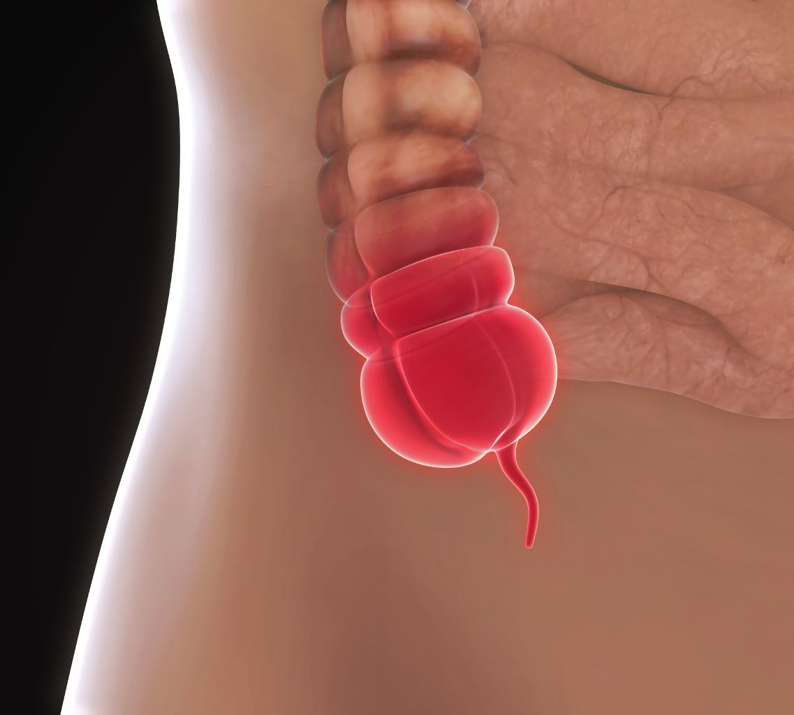 What Is The Function Of The Human Appendix Times Knowledge India