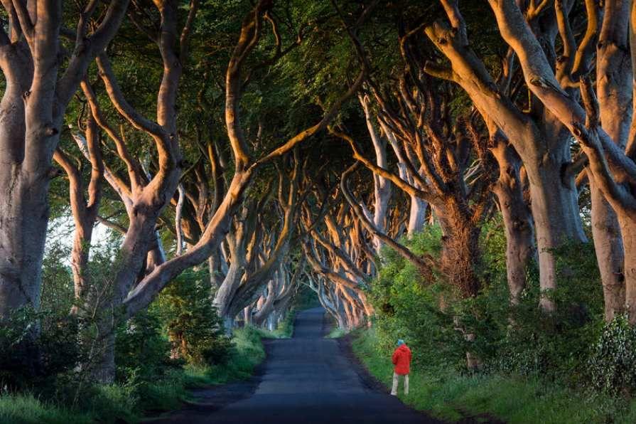 Game_of_Thrones_Dark_Hedges_Northern_Ireland