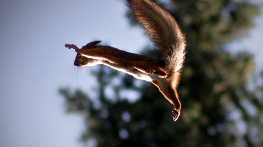Can Animals Fly Without Wings Times Knowledge India