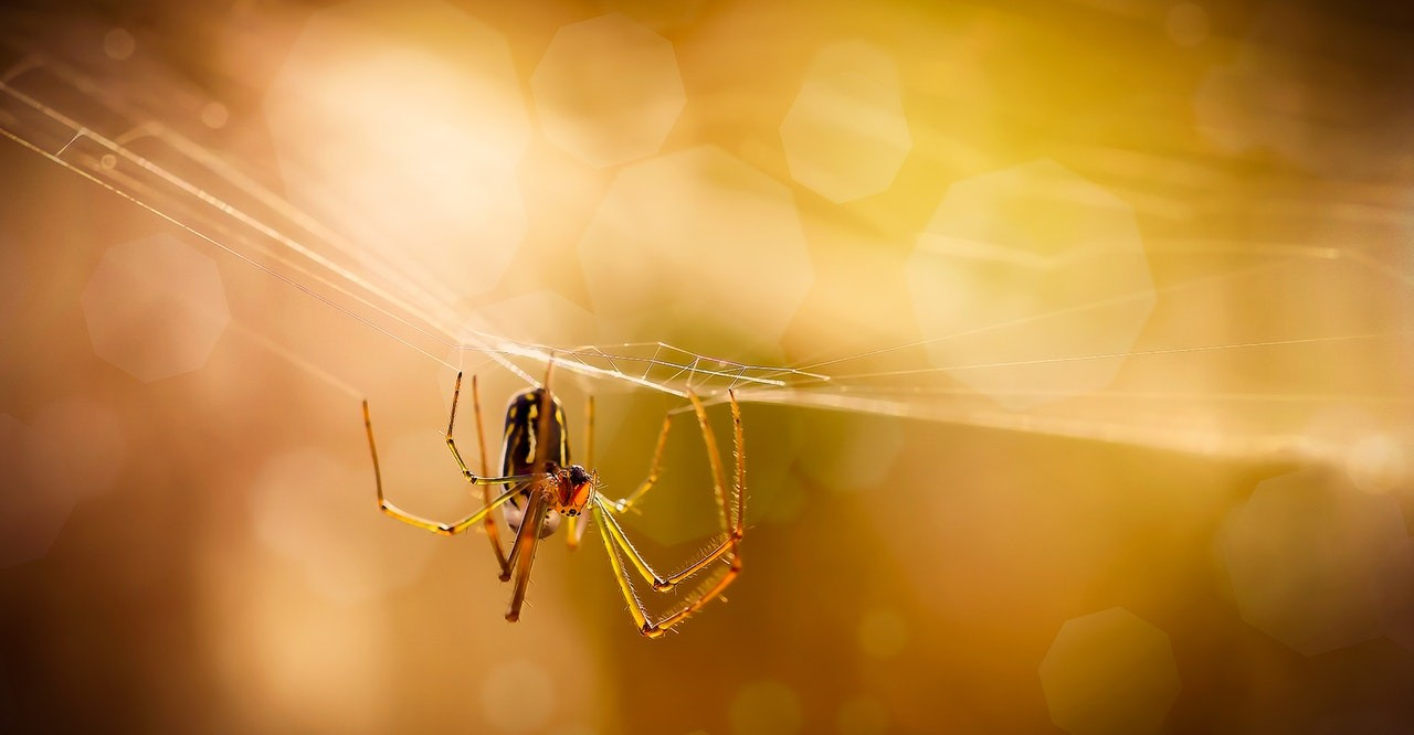Treat_a_spider_phobia_by_watching_spiderman_by_Ray_Bilcliff/Pexels