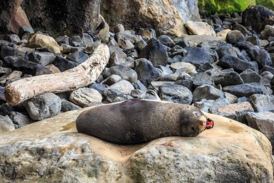 A_USB_memory_stick_has_been_found_in_seal_poo