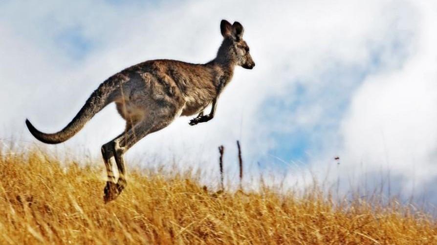 Decoding_the_origin_of_the_kangaroo_hop