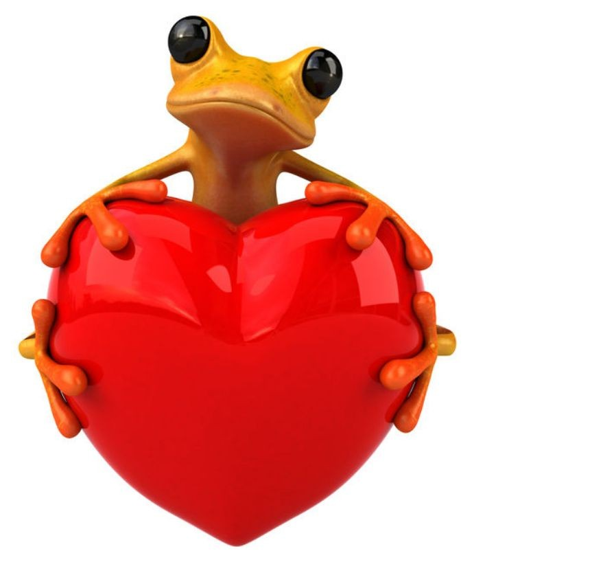 Romeo_the_frog_finds_love